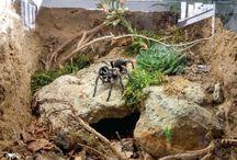 tarantula teraryumları