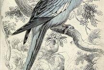 grabados aves y botánica