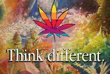 ∙ • ● Planche Cannabis