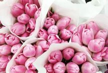 p i n k / 10 reasons why pink is the best colour http://blog.bouxavenue.com/9569/10-reasons-why-pink-is-the-best-colour/