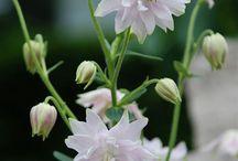 Blommor/Buskar