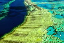 Great Barrier Reef / The pristine waters where all of our ocean minerals are harvested.