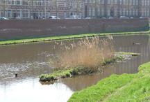 's-Hertogenbosch is groen / Groen en natuur in en om 's-Hertogenbosch
