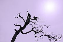 The Birds / Photo art prints
