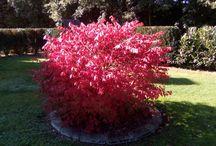 Garden - Autumn Colors