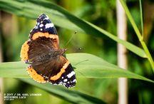 Schmetterlinge / #Schmetterlinge
