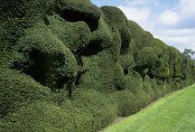 Details :: Hedges