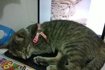 Gatos / Gato vira-lata... lindos