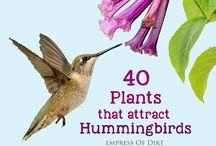 Birds flowers for