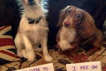 Dog shaming pictures / by Myranda Knopp