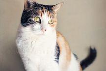 Cat's Meow / by Jana Melinda Photography