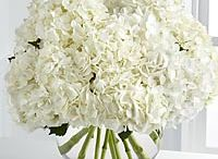 White Flowers / luxurious white flowers to admire and inspire