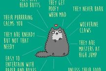 Cats / So cute and funny!