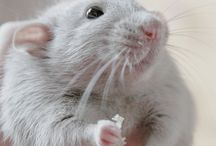 Maisie's mice