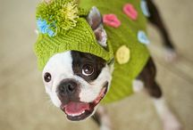 crochet dog clothes