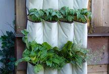 Food Garden / by Ashlee Bennett