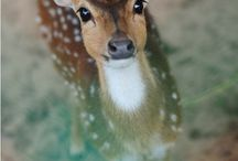 CUTE ANIMALS / by Tracy Miller-Hubbard