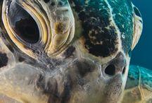 Investigación Tortugas / ANATOMIA DE LA TORTUGA