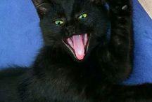 Mi lindo gatito / Un lindo gatito negro