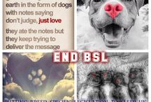 putting breed specific legislation to sleep uk group pics