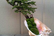 flowers, bonsai's etc
