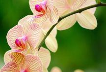 Flori delicate