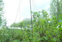 Harjateräs puutarhassa armeringsjärn rebar in garden / Marjapensaiden tukia ja muita juttuja harjateräksestä puutarhaan