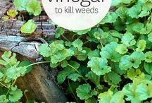 Home Made Weed Killer / Weed Killer - White Vinegar