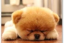 Too cute not to pin / http://www.ramseyfritz.com/