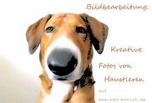 Tiere / Artikel rund um Hund, Katze & Co.