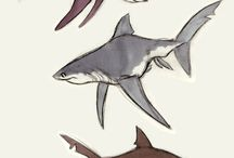 Animals//Fish-Dolphine-Shark-Wale