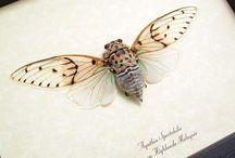 beautiful entomology + lepidoptery / by Mikaela Ehly
