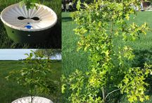 Grow Trees Without Watering / Trees in nature don't require manual watering.  With secrets learned from nature, the Waterboxx collects condensation and rainwater and uses it to establish and grow young trees - with no manual watering.