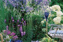 Beautiful Gardens / by Lynda @ Gates of Crystal