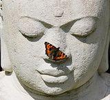 Photos I Love - butterfly