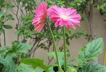 Dubai Gardening / Buy plants, do small changes, re arrange your garden learn about where to buy plants at reasonable prices and some top tips about Dubai Gardening