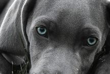 Pewter Color Dogs / Pewter Color #Dogs