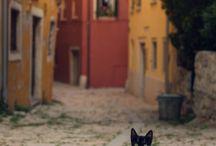 Rovigo Itália