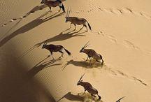 Namíbia | África / As areias da Namíbia ficam prateadas esse ano pela comemoração dos 25 anos de sua independência. O país tem feito progressos inovadores de desenvolvimento sustentável no continente africano, como incluir a proteção de seu habitat na constituição.