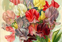 Garden Festivals / Poster designs and artwork linked to garden festivals around the world