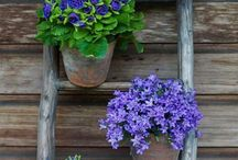 ✨Backyard & Garden Vibes