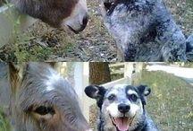Funnies :D