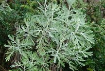 Foraged Edible Weeds