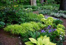 Woodland Gardens / Landscape Design