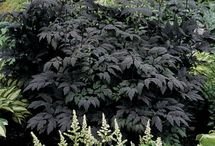 Light & Dark / Variegated and dark leaved plant material