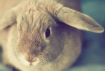 Bunnies, bunnies, it must be bunnies! / by Natalie Lasance