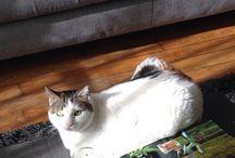 Le chat / Gaufrette