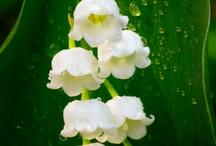 Fav Flowers & Plants
