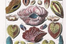 Shells / Ocean treasures