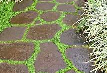 Paths / Ideas and how to install paths. Garden paths, brick paths, rock paths.